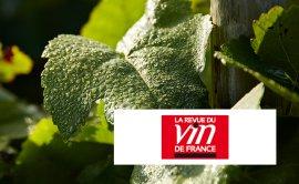 Recaredo, 'la referencia' para La Revue du Vin de France