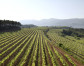 Recaredo, nine years of biodynamic viticulture