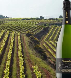 Vinyes de Recaredo a l'Alt Penedès